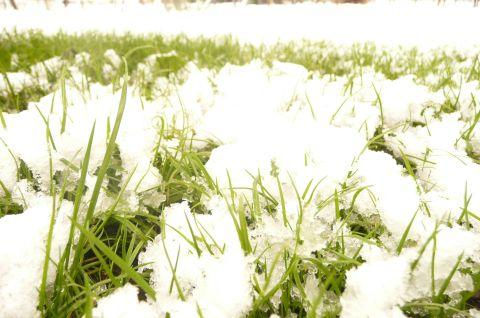 Pirmasis sniegas - tripstančios Magic Minerals pristatymo išlaidos.